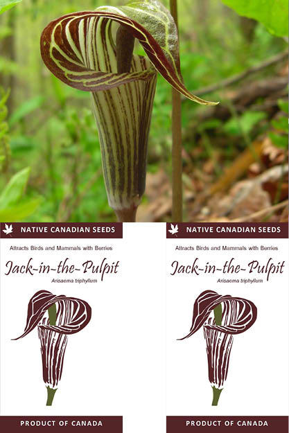 Jack-in-the-Pulpit
