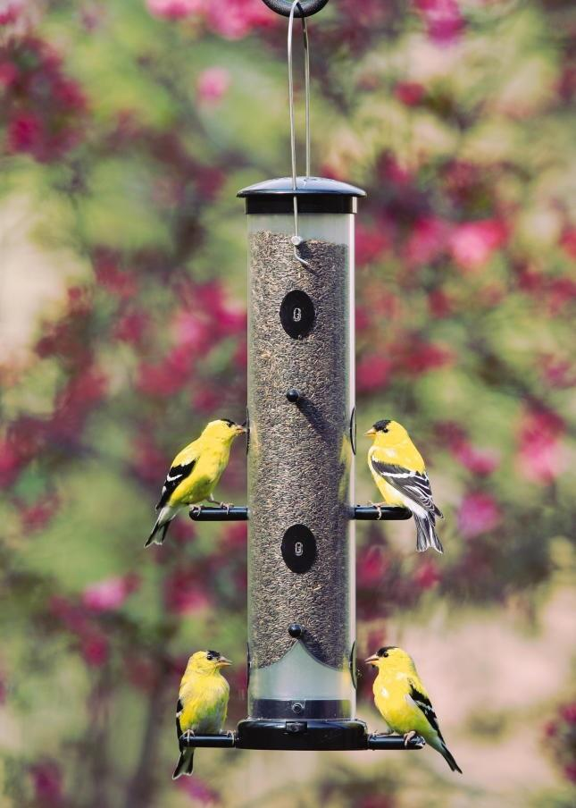 WBU Finch Feeders