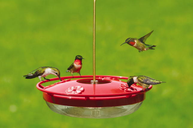 WBU High Perch Hummingbird Feeder