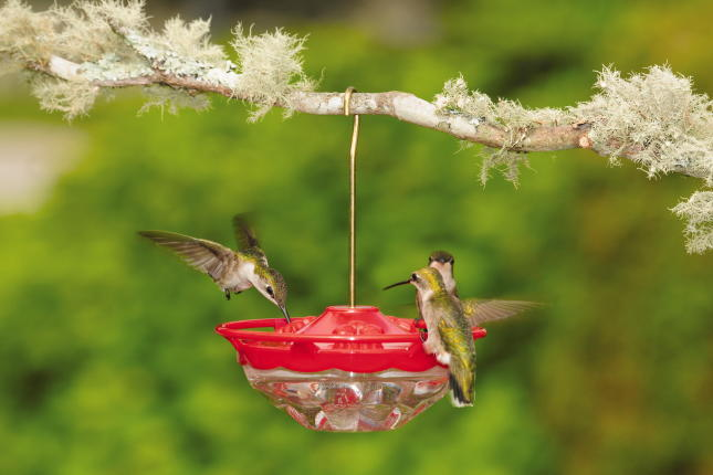 WBU Mini High Perch Hummingbird Feeder