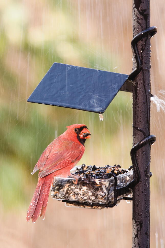WBU APS SideDish™ Bird Feeder EZ-Attach