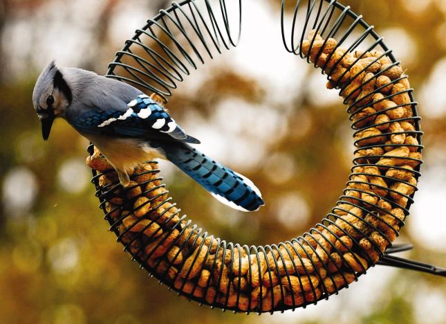 WBU Peanut Wreath Bird Feeder