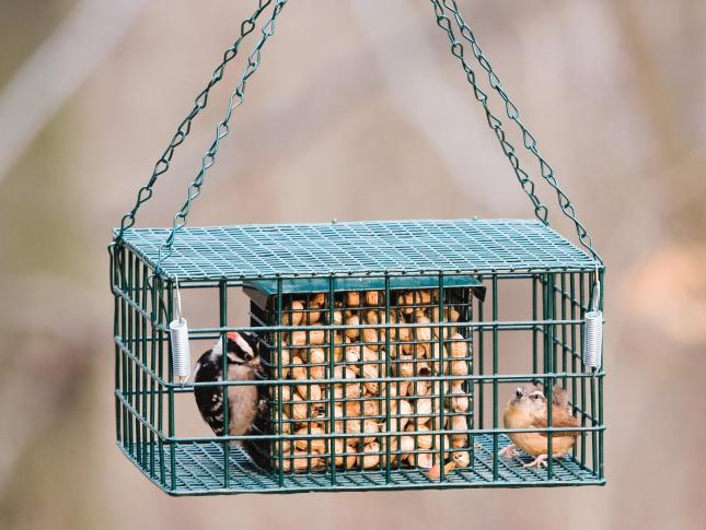 WBU Starling Proof Suet/Peanut Feeder