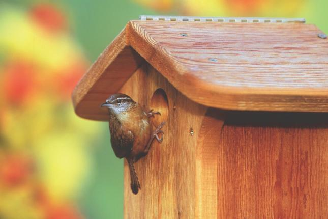 WBU House Wren/Chickadee Nesting Box