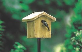 WBU House Wren Chickadee Nesting Box