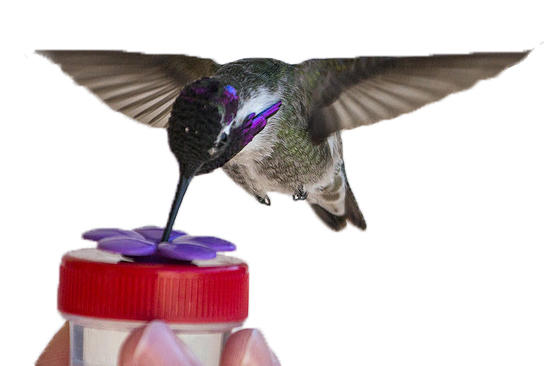 Nectar Dot Hand Held Hummingbird Feeder