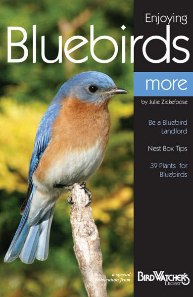 BWD - Enjoying Bluebirds More