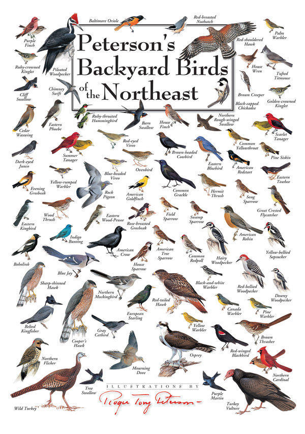 Peterson's Backyard Birds of Eastern Canada Poster