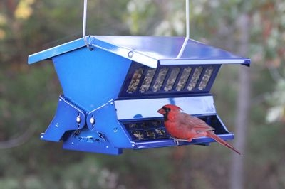 Electric Blue Absolute II Double Sided Squirrel Proof Bird Feeder