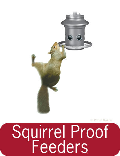 Feeders - Squirrel Proof