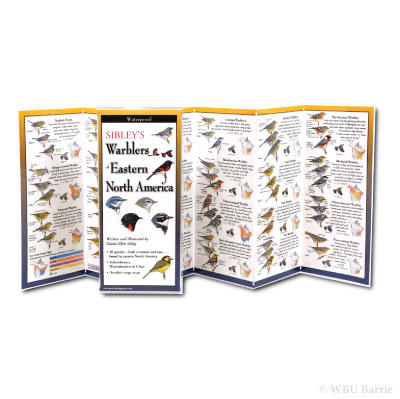 Sibley Pocket Guide Warblers Eastern NA