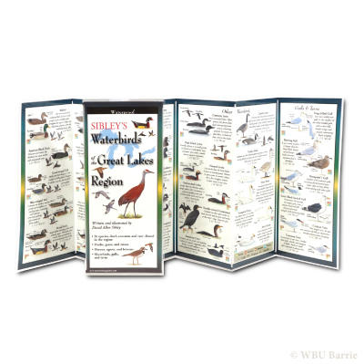 Sibley Pocket Guide Waterbirds of Great Lakes