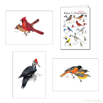 Peterson Illustration Greeting Cards
