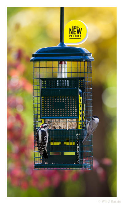 Squirrel Buster Suet
