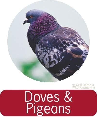 Problem Solving - Doves and Pigeons