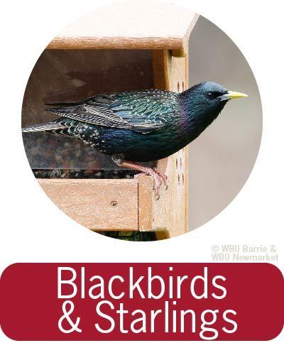 Problem Solving - Blackbirds