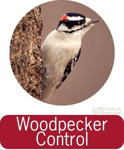 Problem Solving - Woodpecker Control