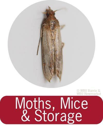 Problem Solving - Moths & Rodents
