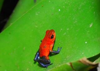 Costa Rica: The Colourful Birds and Wildlife